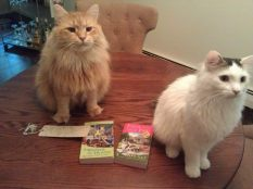 cats and books 2